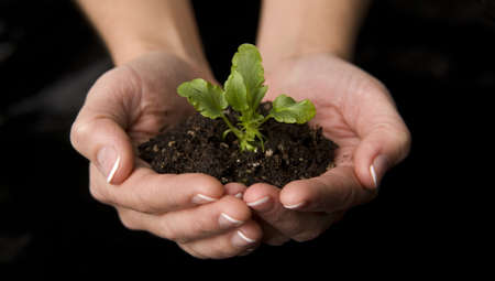 Beautiful hands hold new life as a plant Stock Photo