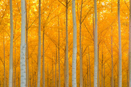 A stand of trees begins to weather the fall cold