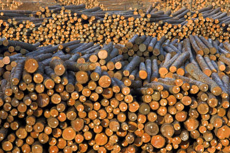 Wood log pile background  photo