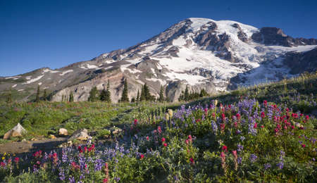 Mt  Rainier and Wildflowers in Bloom photo