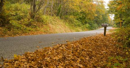 buzon: Hojas de archivo en el lado de la carretera como oto�o llega al campo