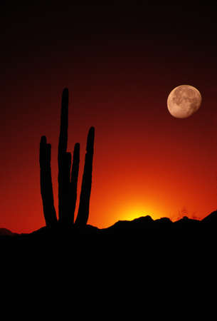 saguaro: Saguaro Moon Arizona United States