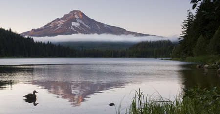 A Duck on Trillium Lake with Mount Hood photo