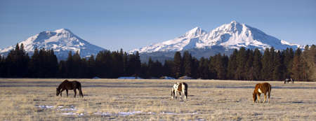 Horse Ranch at the Base of Three Sisters Mountains Oregon photo