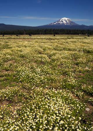 adams: Ranch near the peak that is Mt Adams in Washington State
