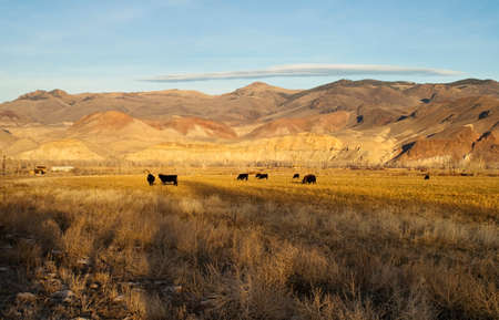 Ranch Landscape livestock grazing near western mountain range photo