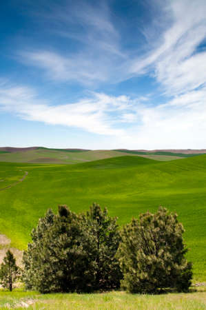 A beautiful day in the Palouse countryside the great northwest United States 写真素材