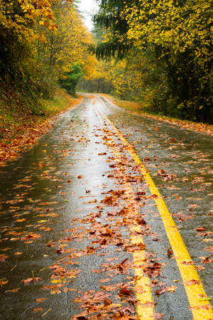 Leaves on the wet road fall day in the woods photo