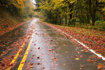 geschniegelt: Die Stra�e ist glatt und nass im Herbst regen Lizenzfreie Bilder