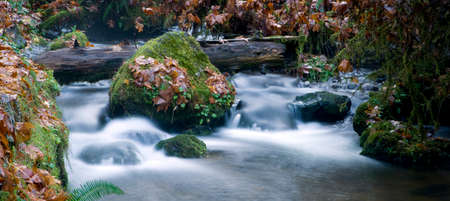 River bank reveals the beauty of moss, leaves, rocks, and boulders in the water photo