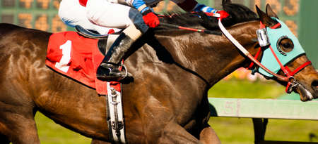horse race: Two Horses and Jockeys Come Aross Finsih Line Neck and Neck Number One Stock Photo