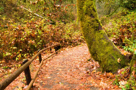 A rain soaked trail winds through tho woods photo