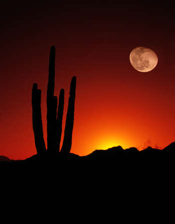 arizona sunset: Saguaro Moon Desert Cactus Arizona United States Stock Photo