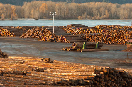 logging industry: Large storage yard for logging industry export from the Columbia River