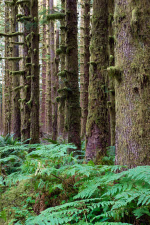 compostion: A vertical compostion of the spectacular scenery in the rainforest Stock Photo