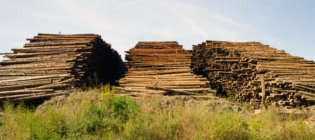 logging industry: Wood storage yard logging industry in the Northwest
