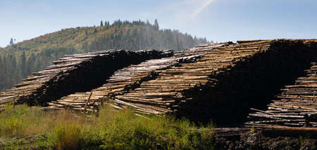 logging industry: Wood storage yard logging industry in the Northwest