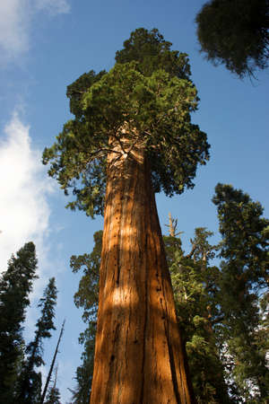 This tree is estimated to be over 2,000 years old photo