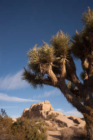 Perfect Sun and Sky at Joshua Tree National Park photo