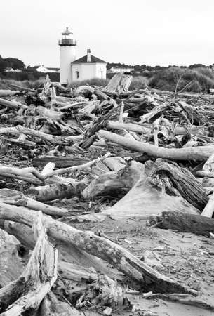 coquille: Driftwood gathers high on the beach viewed at high low tide Stock Photo