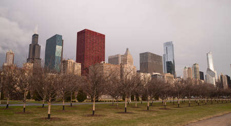 lake shore drive: Trees planted by the city parks department will start flowering soon in Chicago