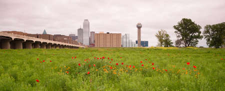 surrounds: Spring brings wildflowers to the Trinity River Basin that surrounds Dallas Texas