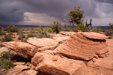 rocky mountain juniper: A compostion of rock outcroppings and trees before it rains in the Utah Wilds Stock Photo