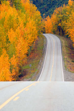 glenn: Fall comes to the Alaska Highway System of transportation with saturated yellow