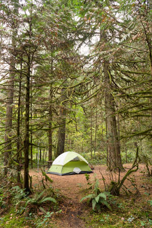 oxbow: Light makes it through to this campsight in the woods