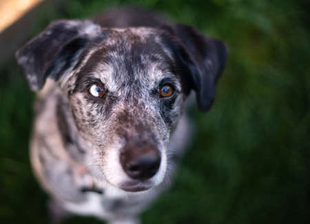 animal body part: This unique dog looks at you with wonderful anticipation Stock Photo