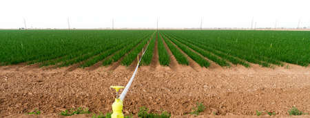 grower: Farmers Field Green Onions California Agriculture Food Grower