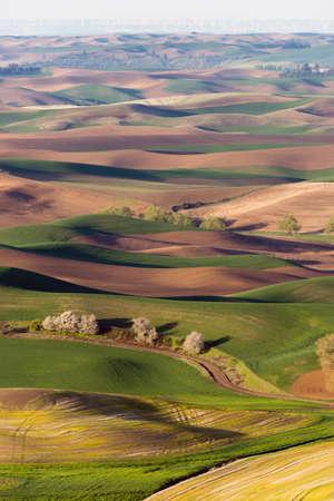 palouse: Palouse Region Steptoe Butte Farmland Rolling Hills Agriculture