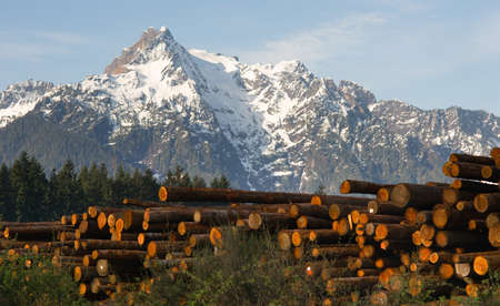 whitehorse: Logs wait to be processed near the base of Whitehorse Mountain in the North Cascades