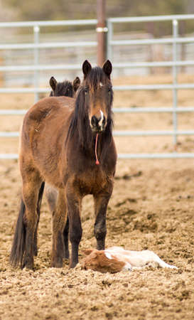 recently: A colt foal can only stand for a few hours recently born