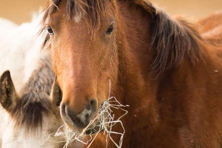 Adoptable horses on site in Oregon near Burns