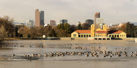 denver at sunrise: These birds seem to love the partially frozen lake in Denvers City Park
