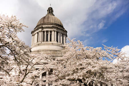Beautiful flowering blossoms adorn the walkway outside the State Capital in Olympia, Washington