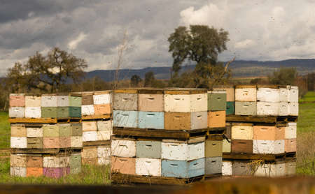 Bees are out doing thier duty on a mild springday buzzing around the boxes they call home Stock Photo