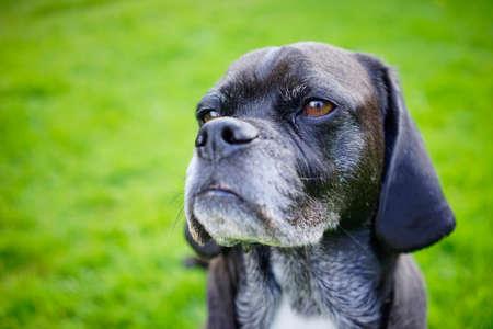 Dieser alte Hund hat keine neuen Tricks Standard-Bild - 83417714