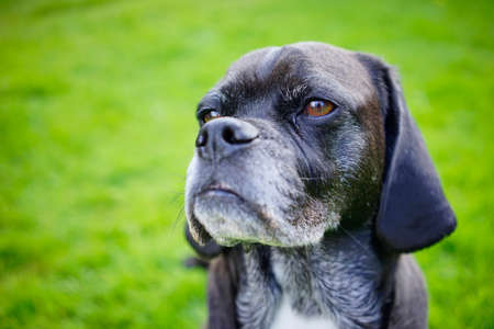This old dog has no new tricks Stock Photo - 83417714