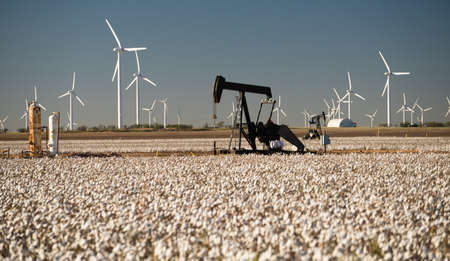 Oil production in a mature cotton field