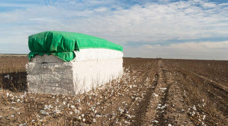 Farmer has baled the ripe cotton crop on his land and waits for pick up