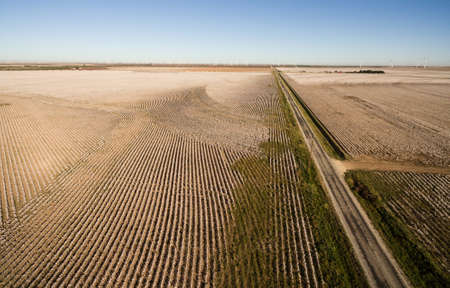 Wind Generators stand in the same field as a harvest ready crop of cotton Stock Photo