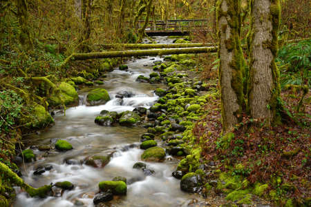 Mossy green growth persists in the Oregon forest around a babbling brook Stock Photo