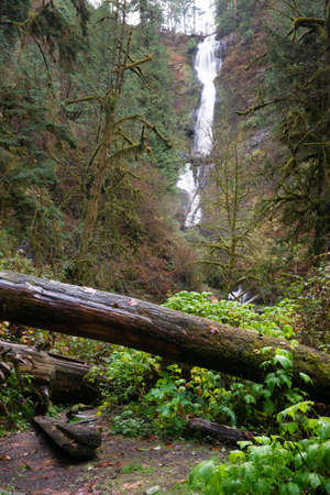 A path has been cut through logs and under brush into the wet rainforest ending at a waterfall Stock Photo