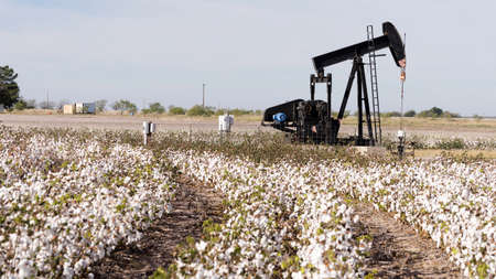 A Pump Jack labors fracking while Cotton sits ready for harvest in West Texas