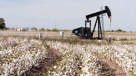 Ein Pump Jack arbeitet an Fracking, während Cotton in West Texas zur Ernte bereitsteht