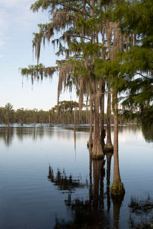 Abundant unseen wildlfie exists in this lush marsh area in the deep southern USA Imagens