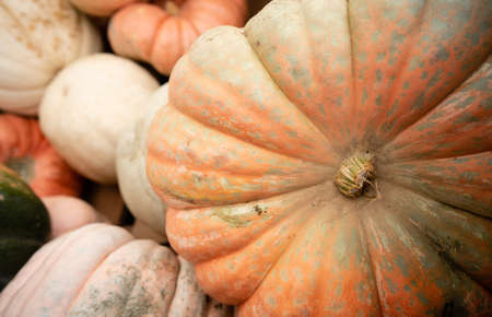 We know fall is here when displays full of Pumpkins and Gourds show up at the market Stock fotó - 112552119