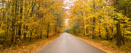 A rural country road travels between trees showing bright fall color as winter approaches Banco de Imagens